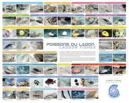 les poissons du lagon