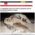 1. Photo_5 janvier 2018 - La dépêche de Tahiti - La première ponte de tortue observée