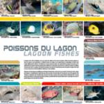 2. Photo 2. Affiche Les poissons du lagon