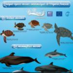 4. Photo 4. Poster Espèces emblèmatiques en Polynésie française Hei moana