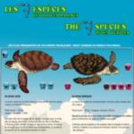 4. Photo Les 7 espèces de tortues marines