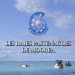 5. Photo Livret Les raies pastenagues de Moorea