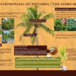Affiche La flore patrimoniale de Tetiaroa