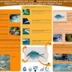 Anatomie et mode de vie des poissons du récif