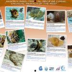 Animaux insolites du récif de corail