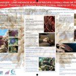 L'Acanthaster, une menace sur les récifs coralliens-réduit
