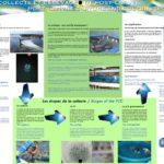 La collecte et l'élevage de post-larves-réduit