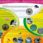 La vie sociale du lagon-réduit