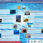 Les animaux dangereux du lagon-réduit