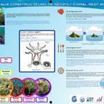 Les coraux constructeurs de récifs-réduit