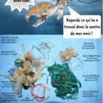 MANA_HONU_pollution_plastique_tortue_marine_déchets_stomacaux