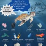 MANA_HONU_pollution_plastique_tortue_marine_degradation_temps