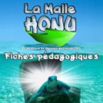 Malle Honu FR